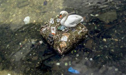 A Föld Napja – természeti környezetünk megóvása