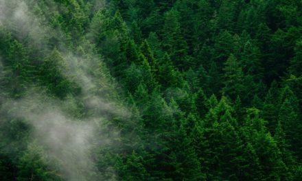 Több billió fa ültetése menthetné meg a Földet
