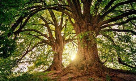 Ma van az erdők világnapja – 10 érdekes tény az erdőkről és a fákról