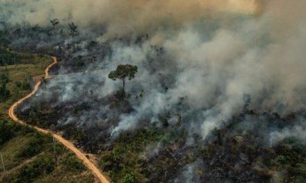 Заклик Папи до молитви за приборкання лісових пожеж в Амазонії