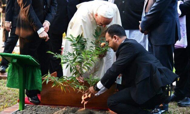 Послання Папи з нагоди Всесвітнього Дня молитви за дбання про створіння
